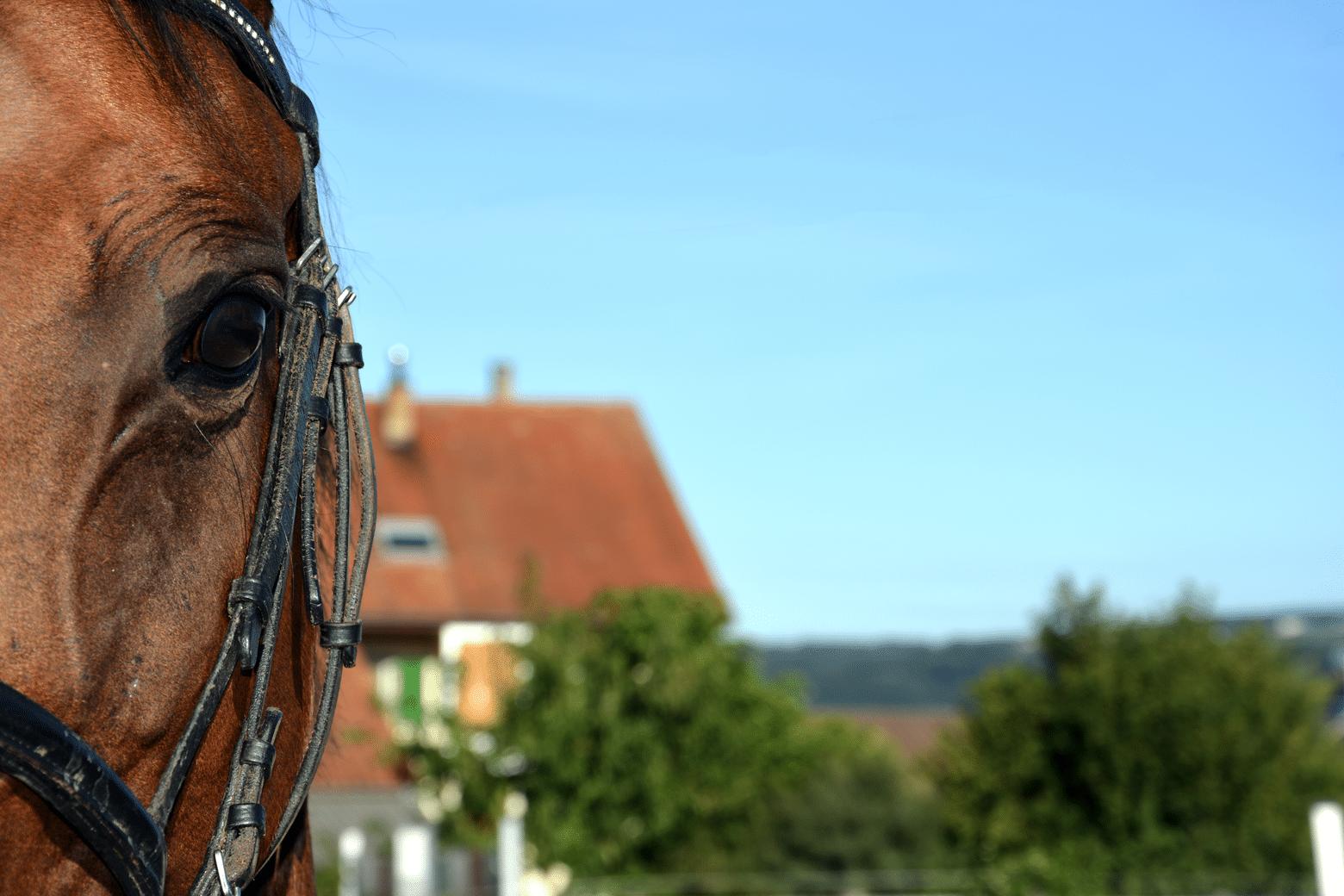 Bienvenue sur Equitannonce.ch