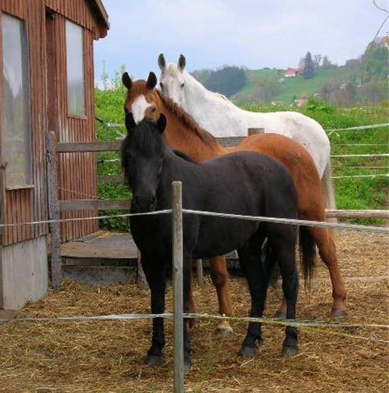 Masser son cheval ou son chien